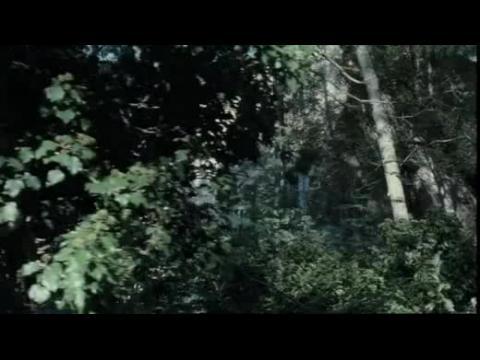 Au fond des bois - Bande annonce VF