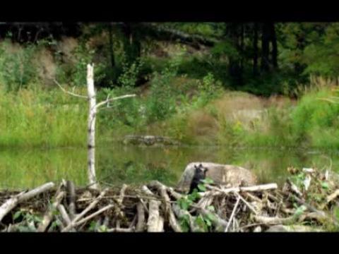 Mèche Blanche, les aventures du petit castor - Bande-annonce VF
