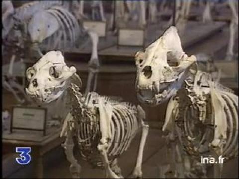 Galeries d 39 anatomie compar e et de pal ontologie jardin des plantes paris france sur - Jardin des plantes paris dinosaures ...