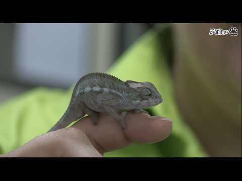 Z'animo s'est installé dans la nurserie de Biotropica
