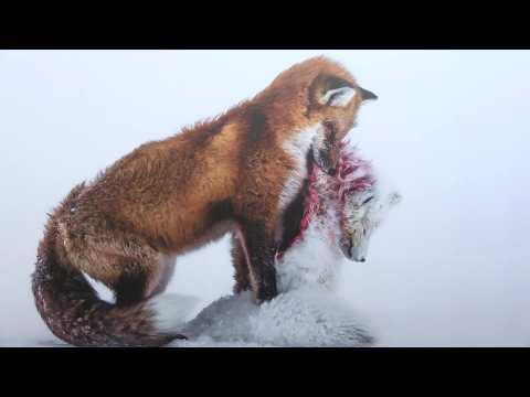 Les plus belles photos animalières du monde au muséum de Rouen