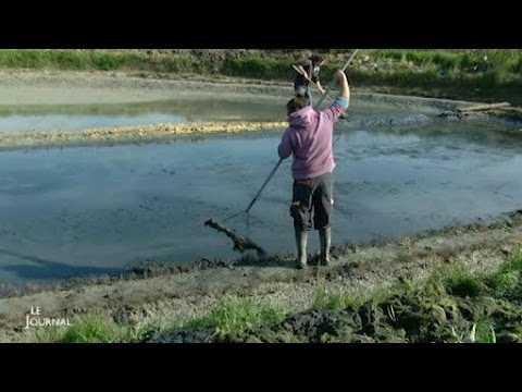 Noirmoutier-en-l'Ile : Se former pour devenir saunier