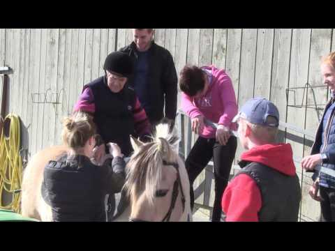 Z'animo Normandie découvre le handi-cheval