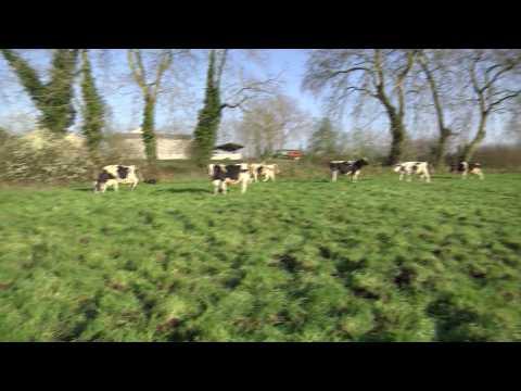 L'impact du changement d'heures sur les vaches et leur agriculteur