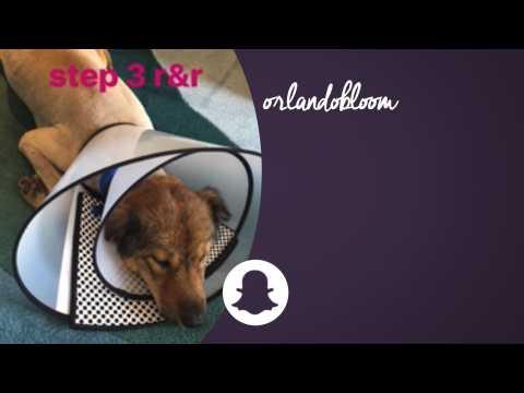 Orlando Bloom saves abandoned dog