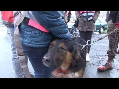 Une gamelle pour les animaux des sans-abri