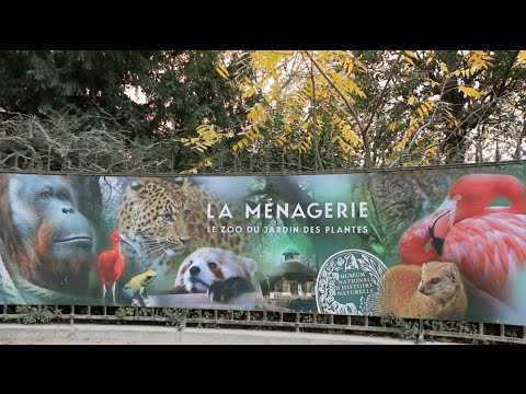 Balade estivale la m nagerie du jardin des plantes sur orange vid os - Zoo du jardin des plantes tarifs ...