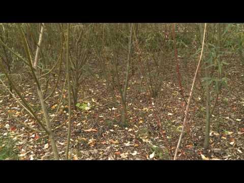 Comment cultiver sur des sols pollu s sur orange vid os - Depollution par les plantes ...