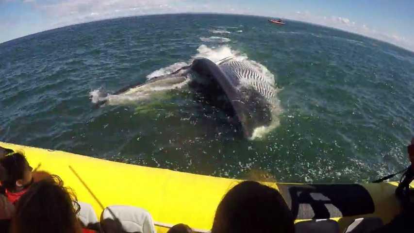 societe insolite une baleine passe sous un bateau de touristes au quebec lepoint CNTsYBq