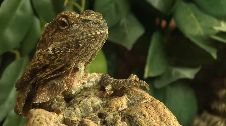 Z'animo : Les reptiles