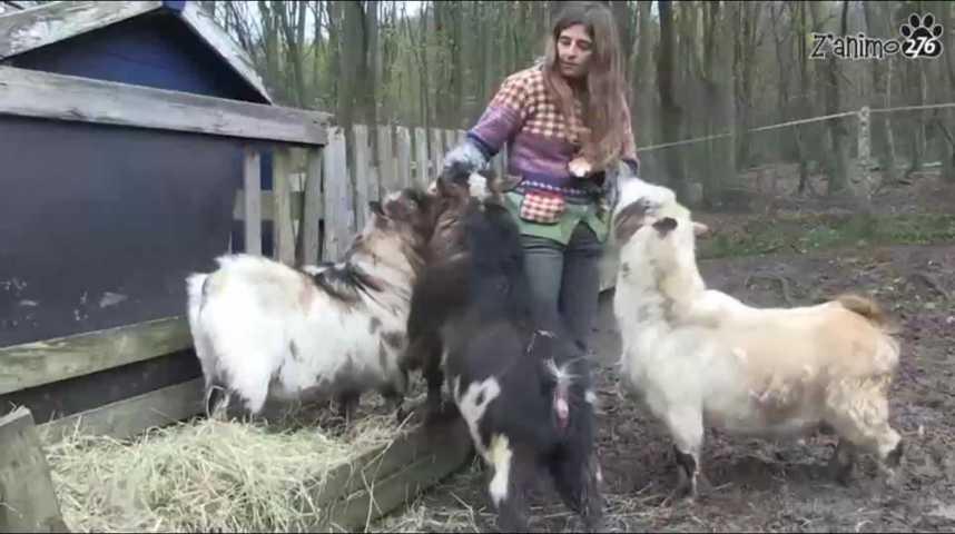 Z'animo à la ferme du Launay