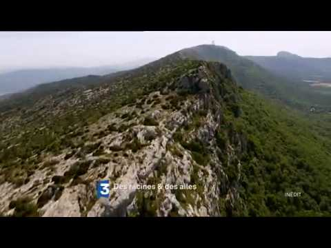 Des racines et des ailes : En Provence, du pays d'Aix aux Alpilles