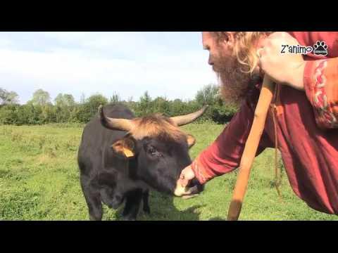 La ferme des Vikings et ses animaux d'un autre temps