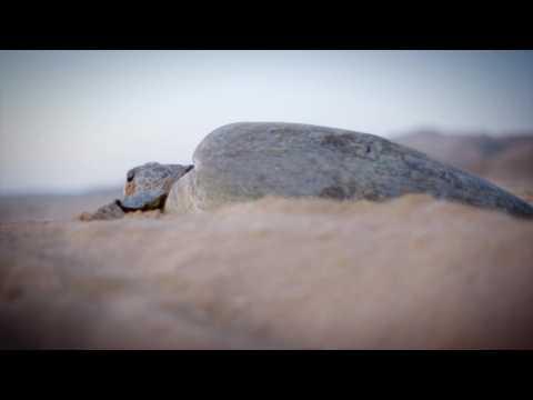 Oman, de sable et d'écume