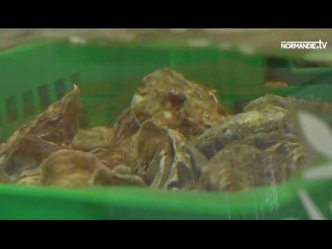 Les huîtres normandes, de vraies perles !
