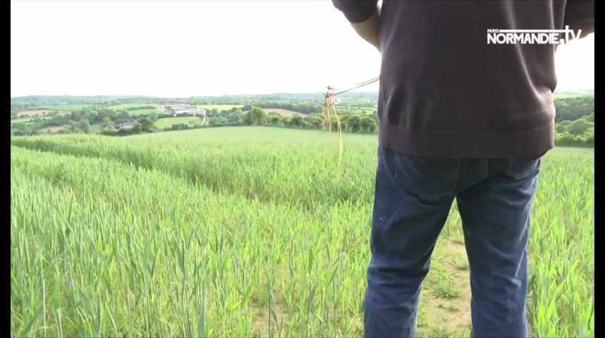 La sécheresse touche les agriculteurs dans la Manche