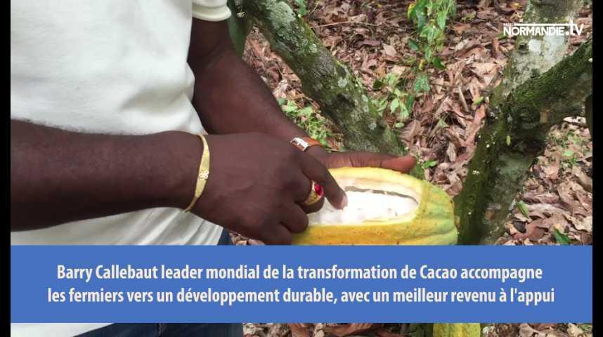 Récolte du cacao dans une ferme au Ghana