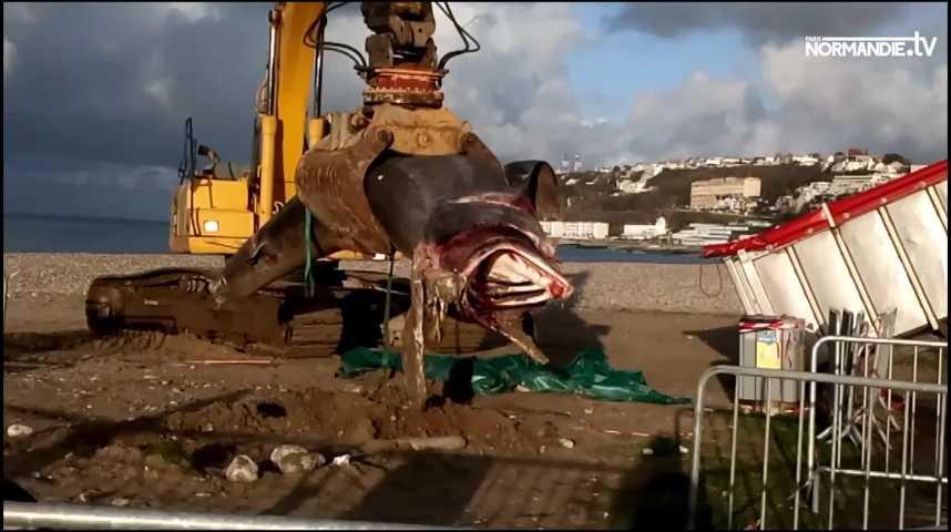 Au Havre, le requin-pèlerin sera finalement évacué en entier