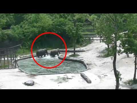 Ce couple d'éléphants a bien des leçons d'entraide et de courage à nous donner