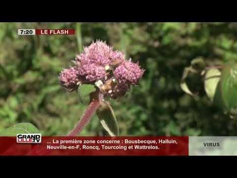 Edition du Matin (1/2) du 28/06/2017