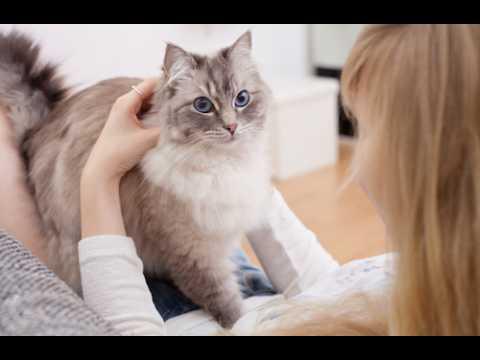 Chats : conseils de vétérinaire
