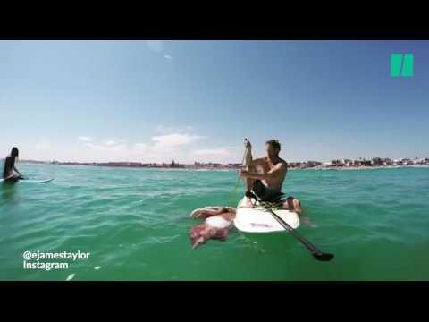 Ces amateurs de paddle ont rencontré un calamar géant blessé