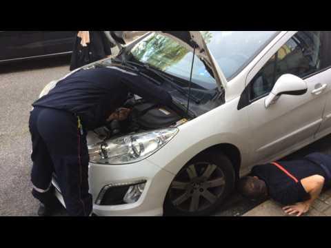 Un chaton coincé dans le moteur d'une voiture