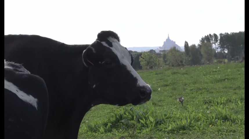 La ferme des Cara-meuh producteur bio de lait et de beurre face à la pénurie actuelle