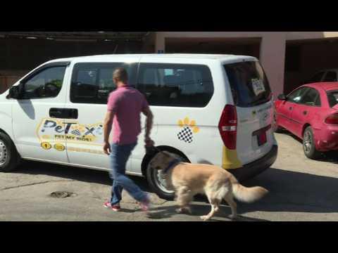 Au Liban, un taxi spécial pour les chiens et chats