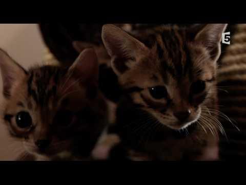 Des petits chatons trop mignons ! - ZAPPING TÉLÉ DU 20/07/2017