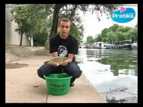 Comment saisir un poisson ?
