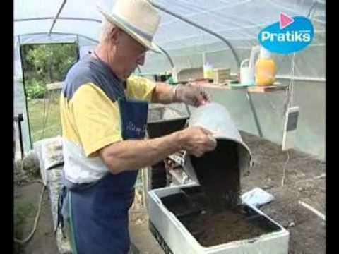 Comment semer ses graines de tomates sur orange vid os - Comment semer des tomates ...