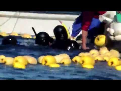 Le Massacre des dauphins à Taiji