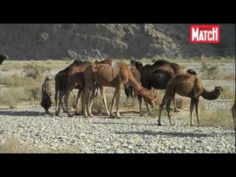 Chris Hondros et les chameaux