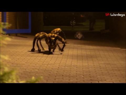Le chien araignée qui effraye une ville de nuit