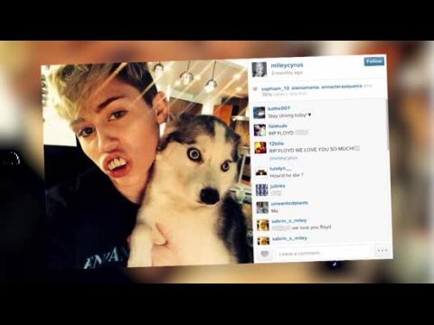 Miley Cyrus craque en chantant Landslide en hommage à son chien
