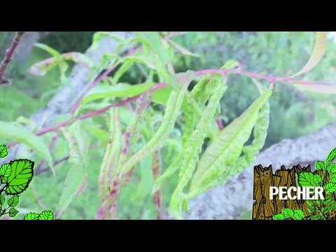 Comment bien arroser vos plantes sur orange vid os - Comment bien arroser ses plantes ...