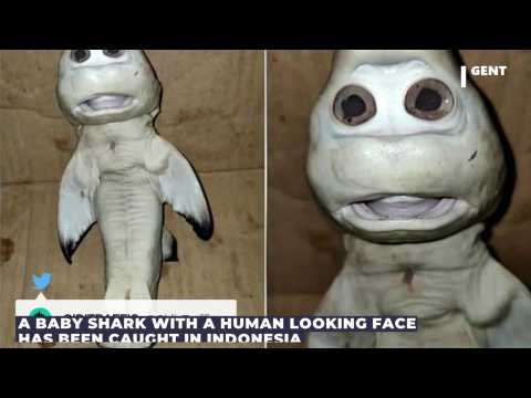 Baby Shark With Unusual Human Face Caught in Indonesia