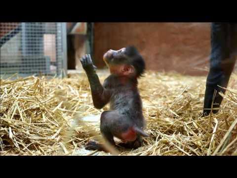 Serial births at Amnéville Zoo