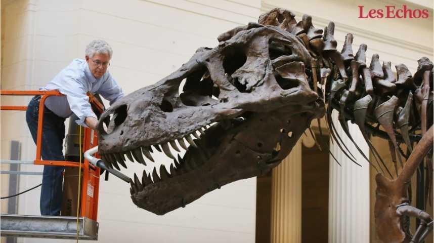 Illustration pour la vidéo Quand les dinosaures envahissent les salles de ventes