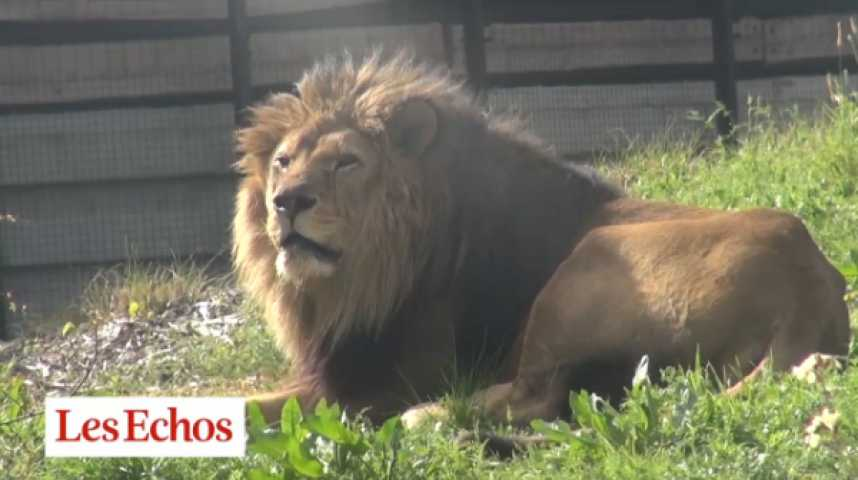"""Illustration pour la vidéo Zoo de Vincennes : les félins en vedette, un """"PPP"""" en débat"""
