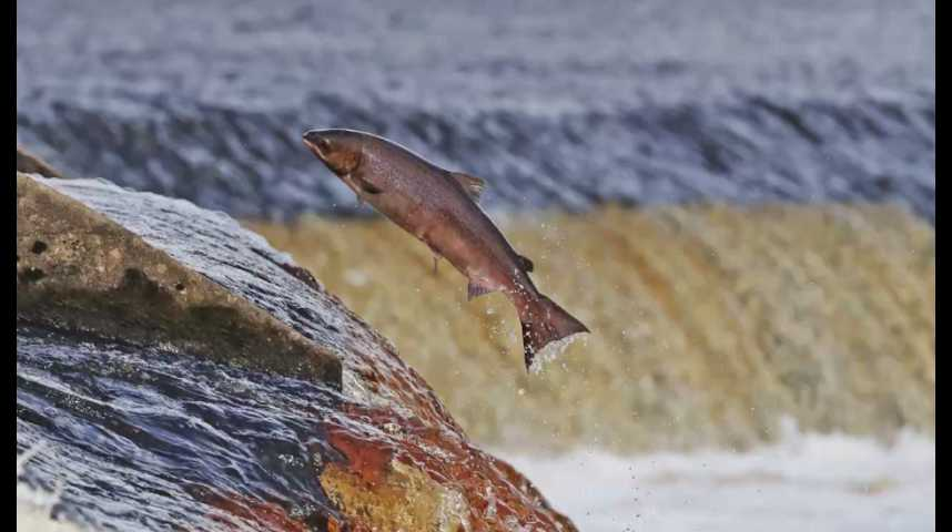 """Illustration pour la vidéo Bio ou non : """"60 millions de consommateurs"""" fait le point sur le saumon"""