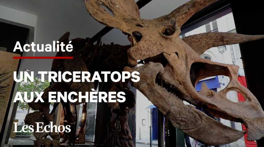 Illustration pour la vidéo Le plus grand tricératops connu exposé à Paris avant des enchères