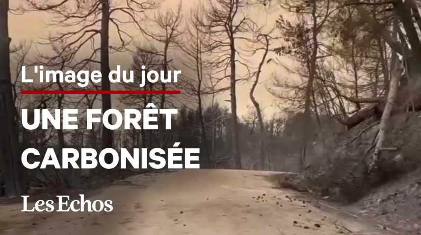 Illustration pour la vidéo Les images des hectares de forêt carbonisée près d'Athènes