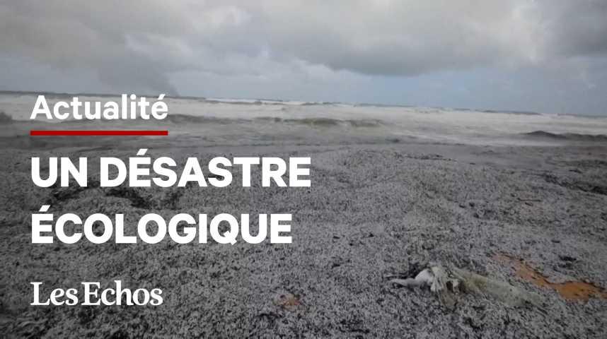 Illustration pour la vidéo Des plages du Sri Lanka recouvertes de billes de plastique après l'incendie d'un bateau