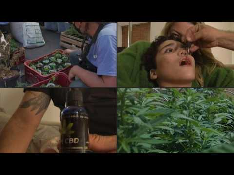 In Brazil, an NGO grows medical cannabis to help patients