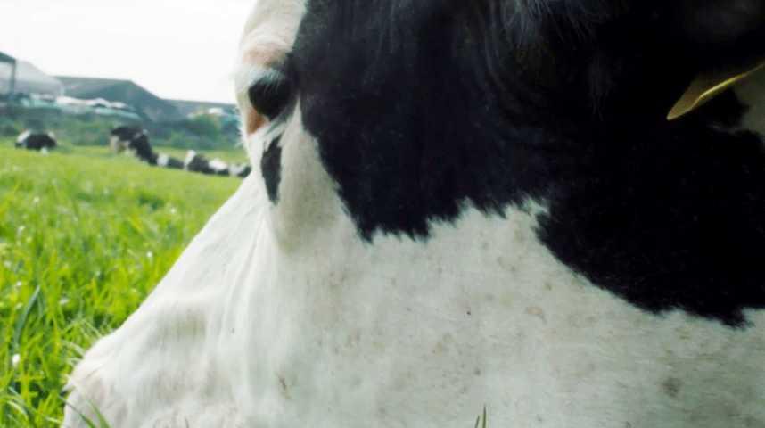 Cow - Extrait 2 - VO - (2021)