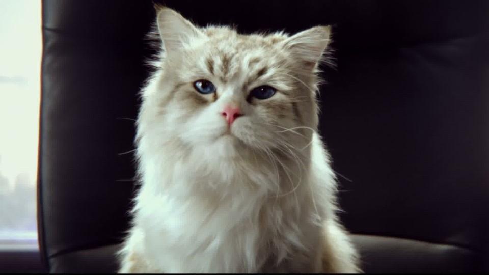 Ma vie de chat - bande annonce 2 - VF - (2016)