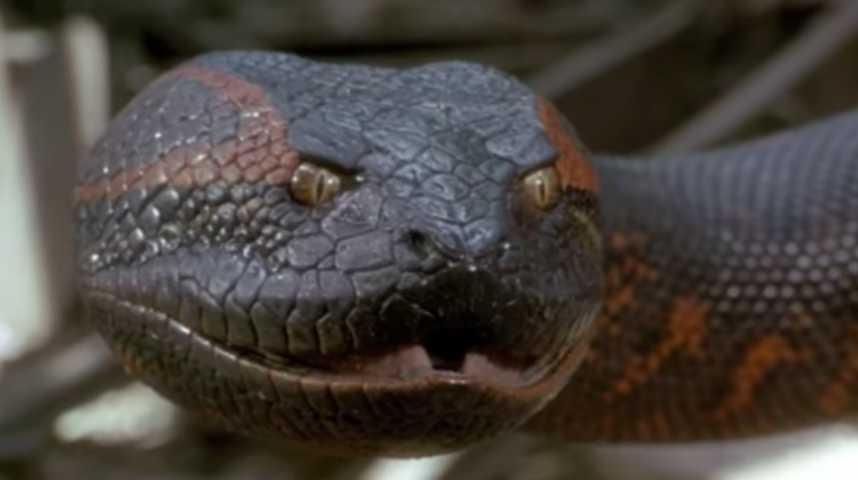 Anaconda, le prédateur - Bande annonce 1 - VO - (1997)
