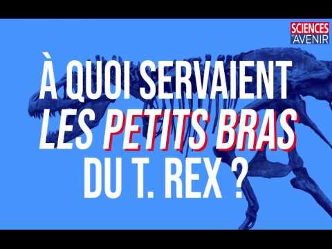 A quoi servaient les minuscules bras du T. rex ?
